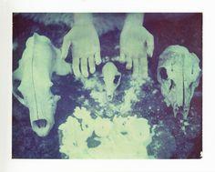 mystic, skulls, la photographi, magic, fashion, fitzgerald, polaroid, feelin artsi, bone