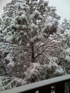 Snow in Payson, AZ!