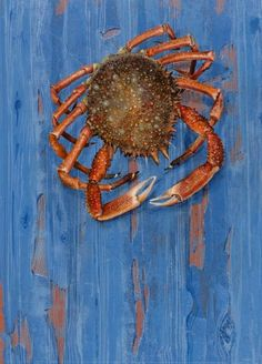 In Season - May, spider crab