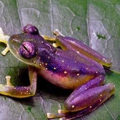 Cool Frogs | Cool frog | My Love For Frogs