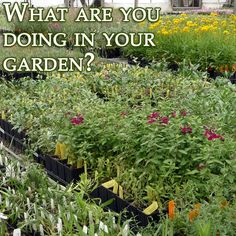 What are you doing in your garden this fall? We're cutting back, cleaning up and planting!