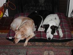 Tipper (r.i.p.) and Kiera asleep