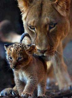 Mama & baba