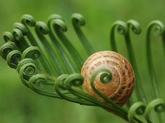 Snail on fern fronds.