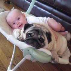 friends, seat, pet, pugs, baby dogs, baby animals, puppi, animal babies, kid