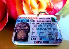 Driver License Pet Tag.