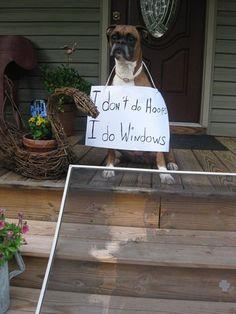 Dog Shame | I love my mom so much I'd jump through windows for...