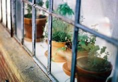 Herbs in the kitchen window. Image via flickr.