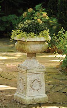 boxwood, lysimachia urn