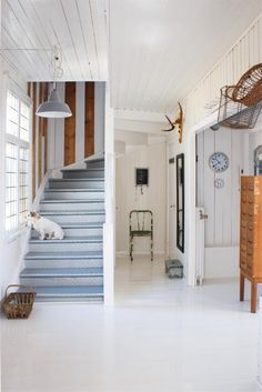 painted wood, interior, stairway, dream homes, beach houses, white, hallway, dog, painted stairs