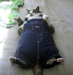 Fat cat in overalls