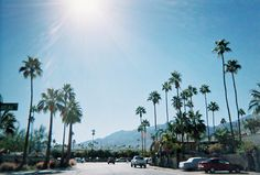 Palm trees + hot sun = SUMMER LOVE!