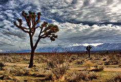 Mojave desert <3
