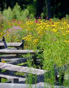 Wildflowers along split rail fence in Nantahala National Forest in North Carolina