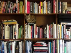 Minnie has taken the role of #NYPLLittleLion very seriously. And we appreciate her enthusiasm.