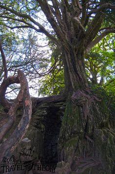 Witch's kitchen Blarney Castle, Ireland