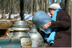 Maple Sugaring at Howell Living History Farm