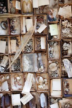 *collection *shells *the selby *organisation