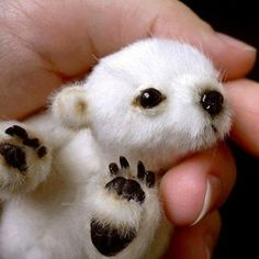 How adorable can a baby polar bear look ... so, so, so cute ... ♥