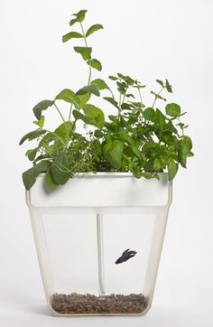 Aquaponic Indoor Garden with Self Cleaning Fish Tank  http://rstyle.me/n/dk2wipdpe