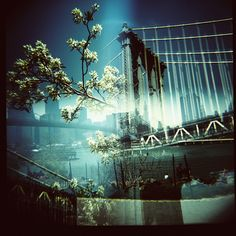Taken with a Diana F+.