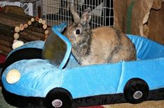 Enrichment and what it means to your Rabbit | Small Pet Select http://ow.ly/aPxfi