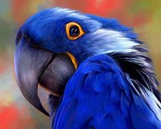 Blue hyacinth macaw by Joan Theodore