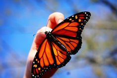 Butterfly in our garden