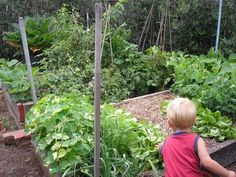 Raised bed vegetable garden area for kids to help with