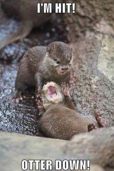 otter down