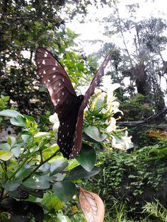 beautyfly