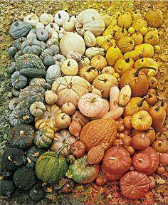 Gourds pumpkin recipes, color palettes, season, colors, fall autumn, gourds, fall pumpkins, winter squash, rainbow