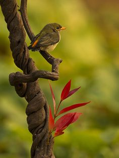 The beauty of the birds
