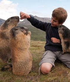 8-Year-Old Has Amazing Friendship With Alpine Marmots - PawNation#photo=4