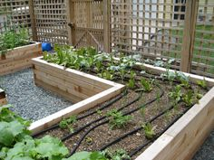 How to Install a Drip Irrigation System --Save time and water with a drip watering system in your vegetable garden — a little patience now will pay off later