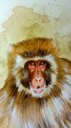 Snow monkey from the Detroit Zoo in the style of Peter Schouten. This is just the face because it's the best part (I love it's l...