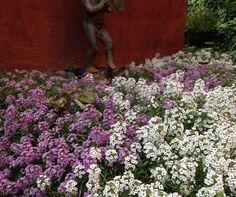 Garden Rant | Uprooting the Gardening World