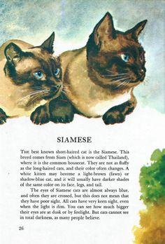 Vintage Cat Illustration Art - 1970's Siamese Cat or Kitten Wall Decor