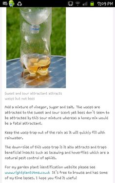 how to kill a hornet in your house