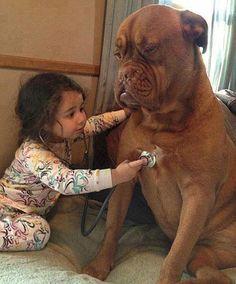 little girls, anim, funni, pet, deep breath, puppi, big dogs, kid, doctor