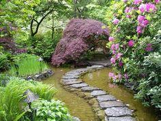 Beautiful water garden.