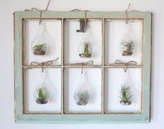Low-commitment greenery..air plants.