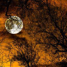 Nature photo, supermoon, moon photography, full moon, harvest moon, autumn, pumpkin orange, surreal, night sky, spooky