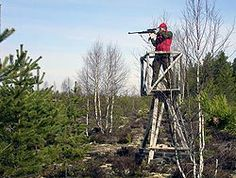 Moose hunting from a stand