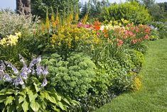 drought tolerant landscaping - Google Search