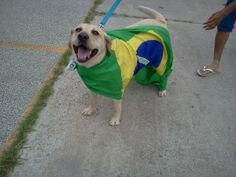World Cup 2014: Brazilian Dogs Don't Support Brazil