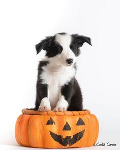 Sitting in a pumpkin