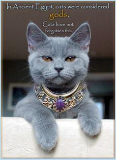 Love it! Beautiful Cat!
