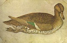 Pisanello - Anatra    Paris Louvre Codex Vallardi_2461