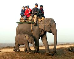 177. Ride an elephant